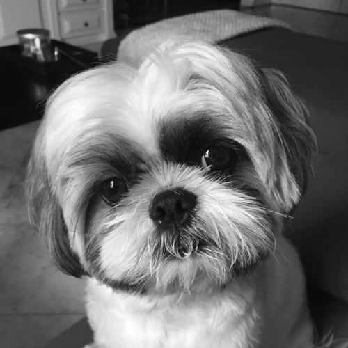 Our People - Gizmo